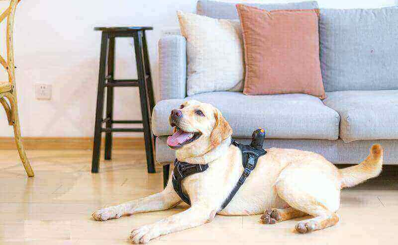 Pet camera is one of the most amazing smart devices